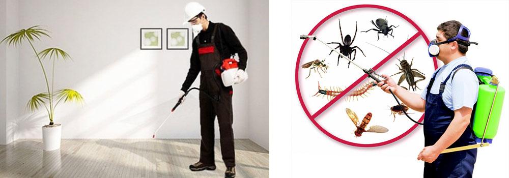 أهم الإجراءات التي تساعدك على التخلص من النمل