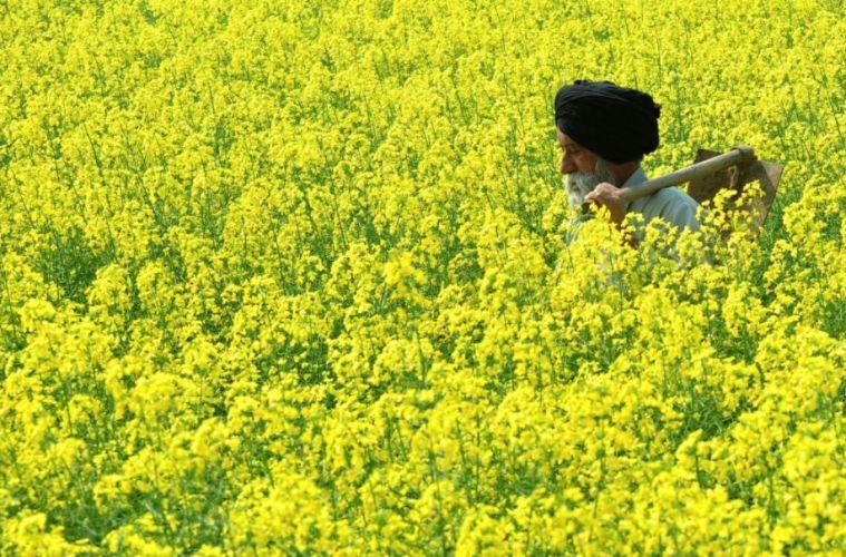 أمور عديدة تجعل للزّراعة أهمية عظيمة وتشجّع عليها